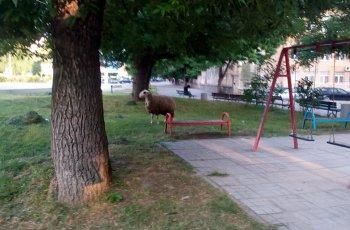 """Нелегални ферми цъфнаха в """"Кършияка"""" СНИМКИ"""