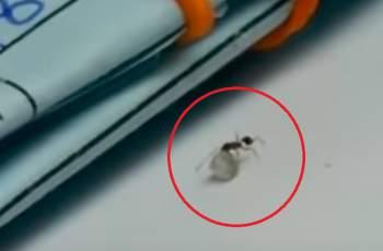 Пипнаха мравка да краде диамант ВИДЕО