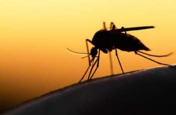 Защо комарите хапят някои повече от други?