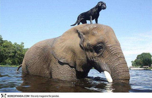 Да коленичиш пред каузата си като слон пред свети мощи
