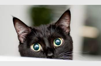 Вижте кои котки са идеални за дома ви