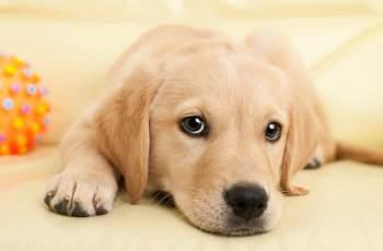 Най-много домашни кучета се губят по Нова година, пазете ги