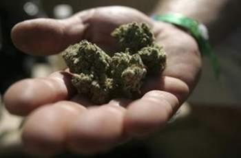 Заловиха двама с рекордно количество марихуана и халюциногенни гъби край Смолян