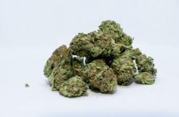 Познайник на полицията загази заради 235 г марихуана