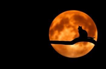 Луната влезе в Рак: Вижте какво ни чака