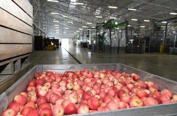 Тръгва схемата за съхранение на плодове и зеленчуци