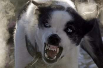 Предлагат в Наредба за евтаназията на кучета  в Хасково