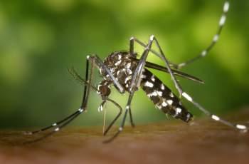 Ново пръскане срещу комари и кърлежи започна в Пловдив