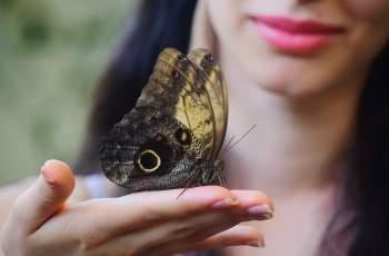 Кралицата на пеперудите се засели в Пловдив