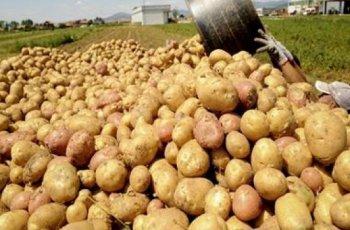 Картофите поскъпнаха двойно за година