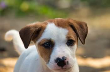 Жестокост! Жена от Раковски обеси кученце СНИМКИ 18+