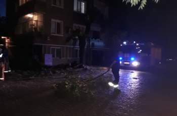 Бурята повали грамадни дървета в Кючука СНИМКИ