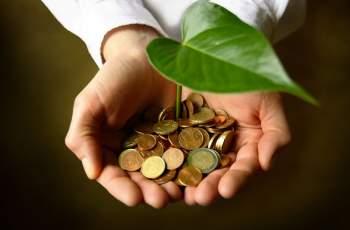 5 растения, които привличат парите и пазят от зли очи