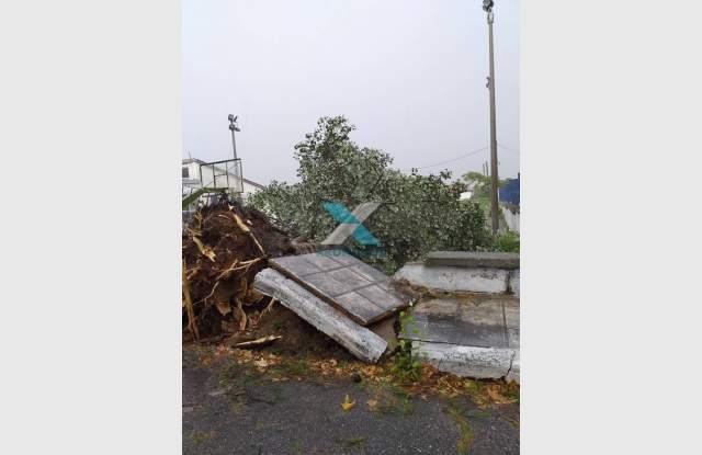 Буря уби 6 души в гръцки курорт, пълен с българи ВИДЕО