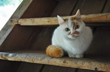 """Читател на """"Марица"""": 14-годишни умъртвяват котки за кеф"""