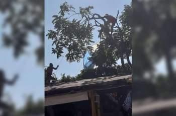 Ад! Парашут с 2 момичета рухна върху дърво в Созопол СНИМКИ