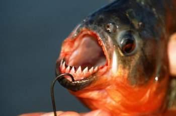 Кошмар: Рибар хвана пираня в наш язовир
