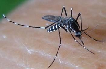 Пазарджиклийка се заразила със западнонилска треска