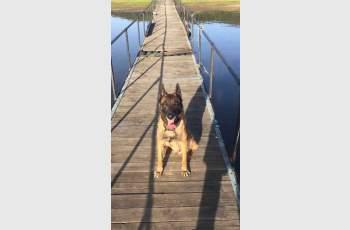 Почина най-прочутото куче в България СНИМКИ