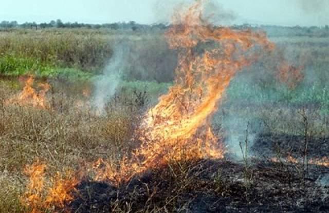 Хайки от агрочиновници дебнат за неправомерно палене на стърнища в