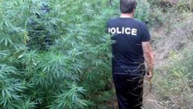 Бивш полицейски шеф върти наркоплантация и алкохолен цех