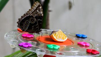 Най-красивите пеперуди полетяха в музея СНИМКИ