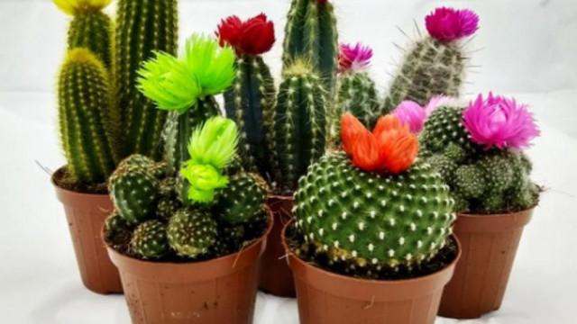 Мъжегони! 3 цветя у дома, които ви обричат на самота
