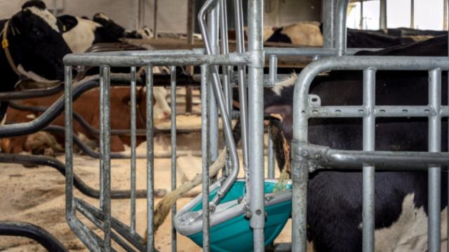 Тоалетна за крави грабна награда в Хановер