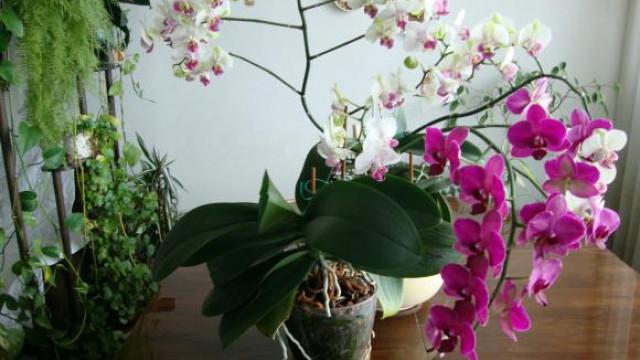 5 правила за красиви орхидеи