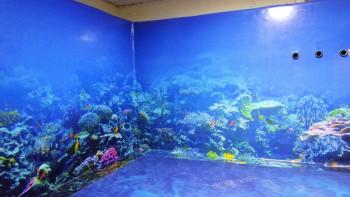 Правят наново 3D панорамата на морското дъно в Природонаучния