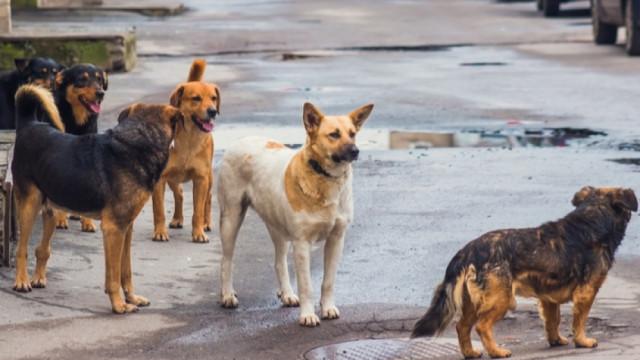 Кричим разделен на две за суровите глоби за хранене на котки и кучета на улицата