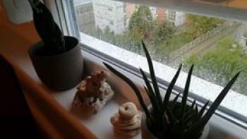 Дъжд отутре, та чак до неделя в Хасковско