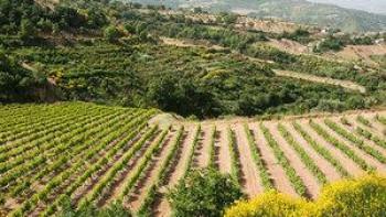 Италия ще е домакин на 29-ото издание на винения мондиал