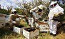 Пчелари от цялата страна на протест
