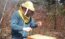 Пчелите на самоубийствен зимен излет в топлото време