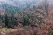 Бедствено положение в Смолян, села без ток заради паднали дървета СНИМКИ